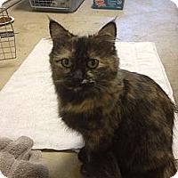 Adopt A Pet :: Olive - Santa Monica, CA