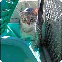 Adopt A Pet :: Carnie - El Cajon, CA