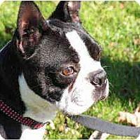 Adopt A Pet :: Wilson - Rigaud, QC