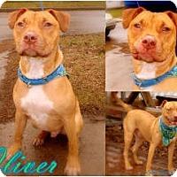 Adopt A Pet :: Oliver - Toledo, OH