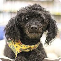 Adopt A Pet :: Little Bit - Sacramento, CA