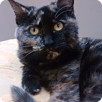 Adopt A Pet :: Rosie - Delmont, PA