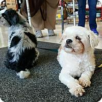 Adopt A Pet :: Juliet & Bella - Bridgewater, NJ