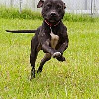 Adopt A Pet :: Stark - Warner Robins, GA