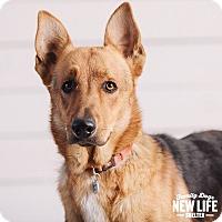 Adopt A Pet :: Carson - Portland, OR