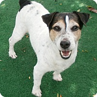 Adopt A Pet :: Kessler - Umatilla, FL