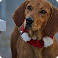 Adopt A Pet :: Kay - Pinehurst, NC