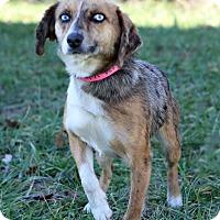 Adopt A Pet :: Valene - Waldorf, MD