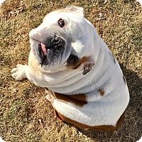 Adopt A Pet :: Twinkie - Park Ridge, IL