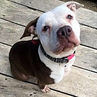 Adopt A Pet :: MUNECA - Lucasville, OH