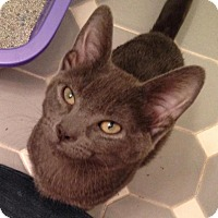 Adopt A Pet :: Stavros - River Edge, NJ