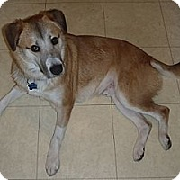 Adopt A Pet :: Gus - Hamilton, ON