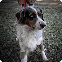 Adopt A Pet :: Tess - Abilene, TX
