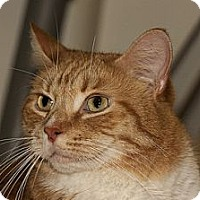 Adopt A Pet :: Charlie - Lombard, IL