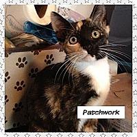 Adopt A Pet :: Patchwork - Miami, FL