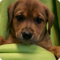 Adopt A Pet :: TESS LITTER - Pompton Lakes, NJ