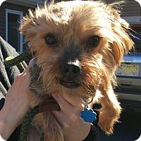 Adopt A Pet :: Dante - Rockaway, NJ