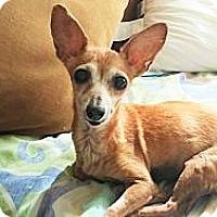 Adopt A Pet :: Loretta - Wallingford Area, CT