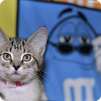Adopt A Pet :: Posh Spice - Medina, OH