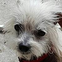 Adopt A Pet :: Gizmo - Santa Fe, TX