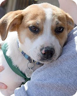 Shepherd (Unknown Type) Mix Puppy for adoption in Memphis, Tennessee - Dani