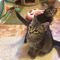 Adopt A Pet :: Abbie & April - Overland Park, KS