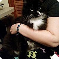Adopt A Pet :: Kenny - Hockessin, DE
