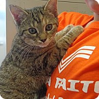 Adopt A Pet :: Maude - Crawfordville, FL