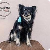 Adopt A Pet :: Jaz - Shawnee Mission, KS