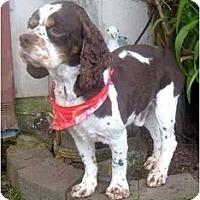Adopt A Pet :: Rebel-Rowser - Tacoma, WA
