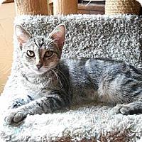 Adopt A Pet :: Tauri - Richland, MI
