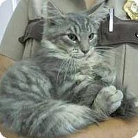 Adopt A Pet :: Titan - Arlington, VA