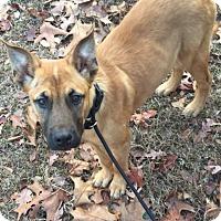 Adopt A Pet :: Jingles - Glastonbury, CT