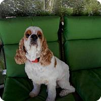Adopt A Pet :: Romeo - Adopted! - Kannapolis, NC