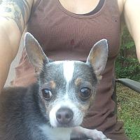 Adopt A Pet :: Pepper - Windermere, FL