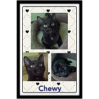 Adopt A Pet :: Chewy - Jeffersonville, IN