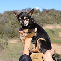 Adopt A Pet :: Tinker - Creston, CA