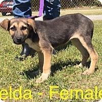 Adopt A Pet :: Zelda - Waycross, GA