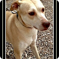 Adopt A Pet :: Rikki - Tombstone, AZ