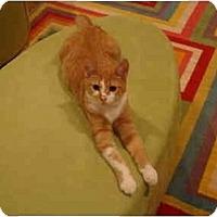 Adopt A Pet :: Bubba - Muncie, IN