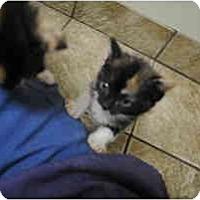 Adopt A Pet :: Geneva - Secaucus, NJ