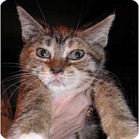 Adopt A Pet :: Cupcake - Warren, MI