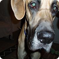 Adopt A Pet :: Kane - Phoenix, AZ