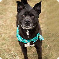Adopt A Pet :: Tippy - ADOPTED! - Zanesville, OH