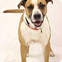 Adopt A Pet :: Jaxx - Bradenton, FL