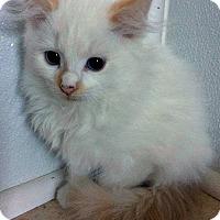 Adopt A Pet :: Oswald - Jefferson, NC