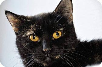 Domestic Shorthair Cat for adoption in Griffin, Georgia - Luna