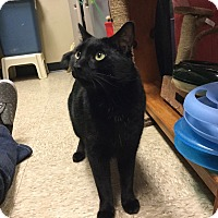 Adopt A Pet :: Kobee - Colmar, PA