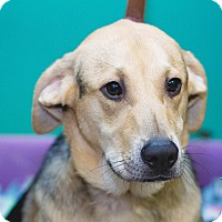 Adopt A Pet :: Buck - Evansville, IN