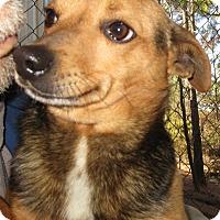 Adopt A Pet :: Poco - Melbourne, AR